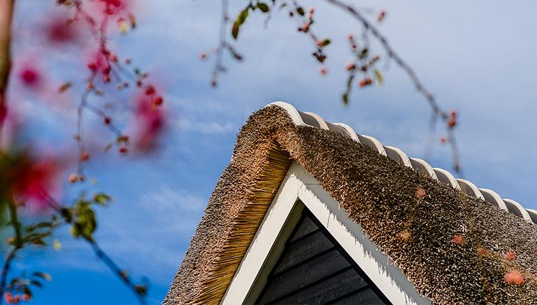 rieten dak, rietgedekte kap, rieten kap, riet, dakbedekking, huis bouwen