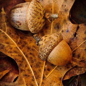 Herfst, huis herfstproof maken, herfst proof, Trends & Lifestyle, Huis Bouwen, huisbouwen.nl, blog, herfst inspiratie, interieur